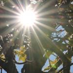 Ahorngarten-Sonne